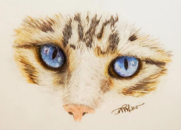 Blue Eyed Cat Face Colored Pencil Drawing   Tracy Marie Lewis   www.stuffnthingz.com