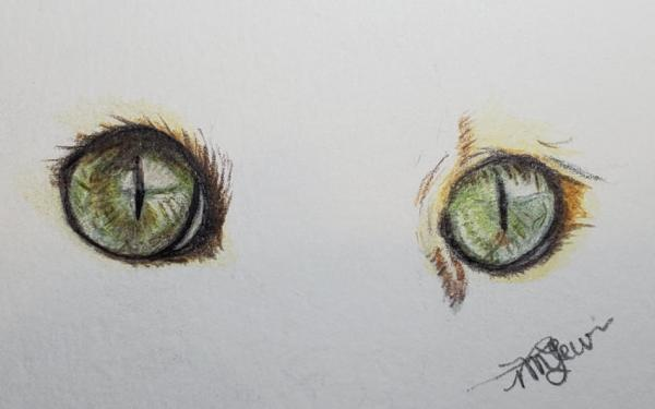 Cat Eyes In Colored Pencil 1   Tracy Marie Lewis   www.stuffnthingz.com