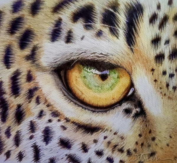 Leopard Eye Study Tutorial | Tracy Marie Lewis | www.stuffnthingz.com