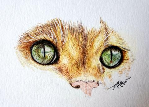 Cat Face In Colored Pencil 1   Tracy Marie Lewis   www.stuffnthingz.com