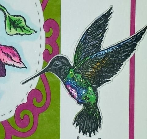 Our Daily Bread Designs Hummingbird and Fuschia Close Up