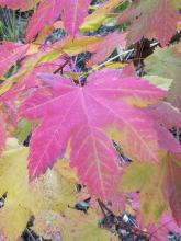 Beautiful Fall Colors At Leavenworth RV Campground | Tracy Marie Lewis | www.stuffnthingz.com