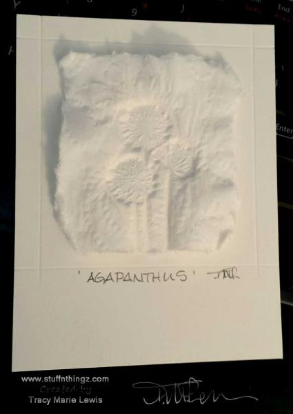 Agapanthus Casting Card   Tracy Marie Lewis   www.stuffnthingz.com