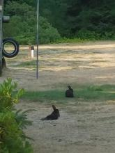Our Campground Memberships Experience - The BIG One - Part 1 Bunnies | Tracy Marie Lewis | www.stuffnthingz.com
